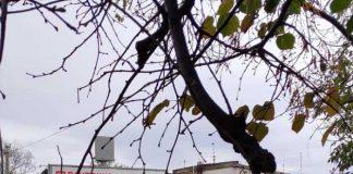 Аварія на вулиці Шевченка. Фото Варта-1