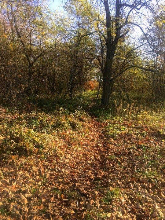 Ірландський архітектор розробить проект парку для Гніздичівської ОТГ