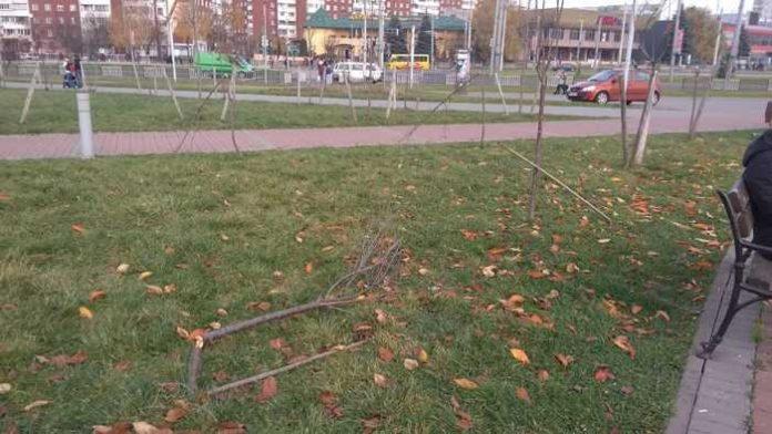 У Львові вандали знищили 32 дерева
