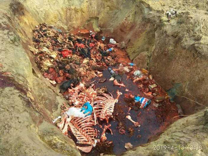 На Львівщині виявили ще один злочин із незаконного захоронення тваринних рештків. Фото Ігор Муравський