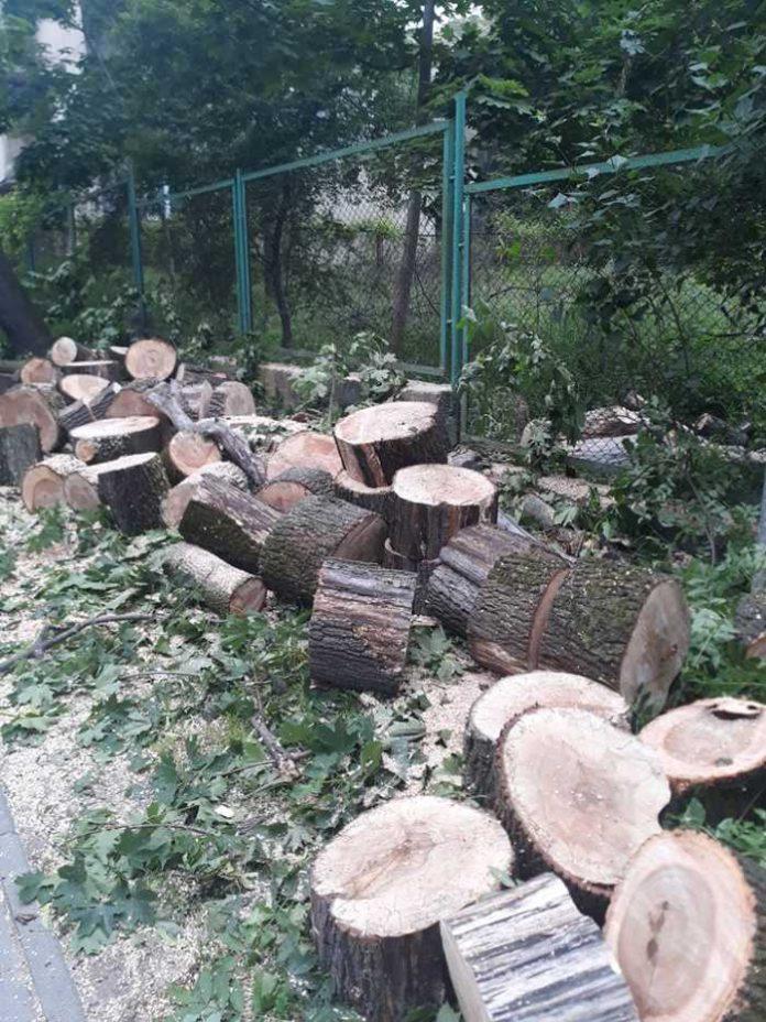 Підлеглі Садового продовжують зрізати дерева у Львові
