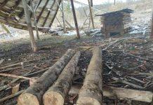 На Львівщині продовжують незаконно зрубувати дерева. Фото: ГУ НП.