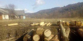 На Львівщині продовжують незаконно рубати ліс