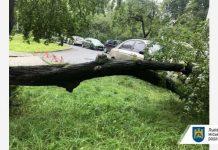 У Львові дерево травмувало жінку. Фото: ЛМР.